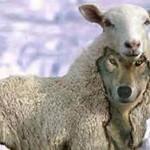 Sheep Wolf